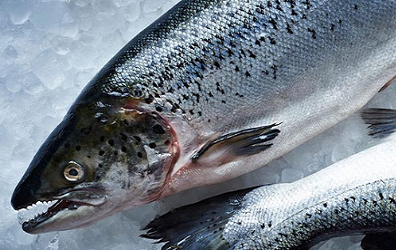 Cá hồi tươi Na Uy nguyên con